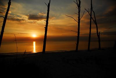 Tree's at Lover's Key, photo taken in December 2008, Lover's Key State Park.