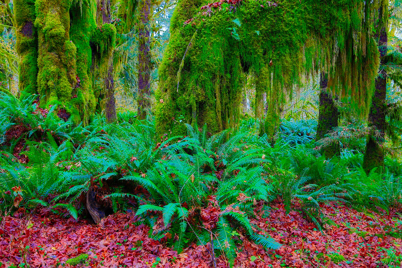 ~ Hall of Mosses ~