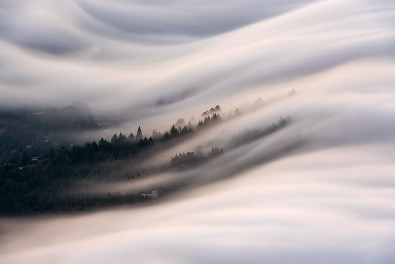 Fog flow on Mt. Tam, San Francisco CA