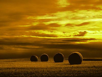 Saskatchewan Hay Roles Gold