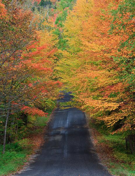 Billy Bear Road
