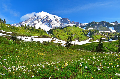 Skyline trail with Avalanche Lilly wildflowers, Mt. Rainier National Park