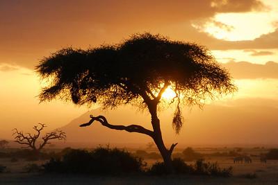 Sunset Amboseli Park  Kenya 2006