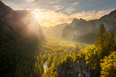 First sunrise light illuminating the valley floor trees, Yosemite National Park