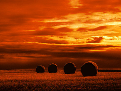 Saskatchewan Hay Roles Orange
