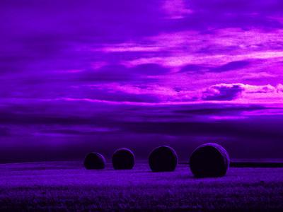 Saskatchewan Hay Roles Purple
