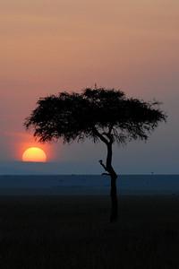 Sunrise Masai Mara Kenya 2006