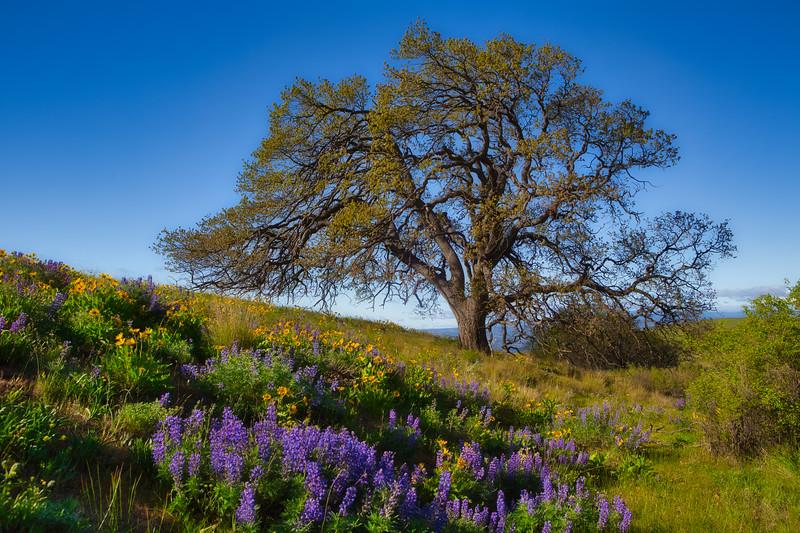 ~ Tree of Faith ~