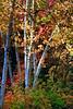 Killarney Provincial Park - Ontario<br /> Singh-Ray LB Color Combo