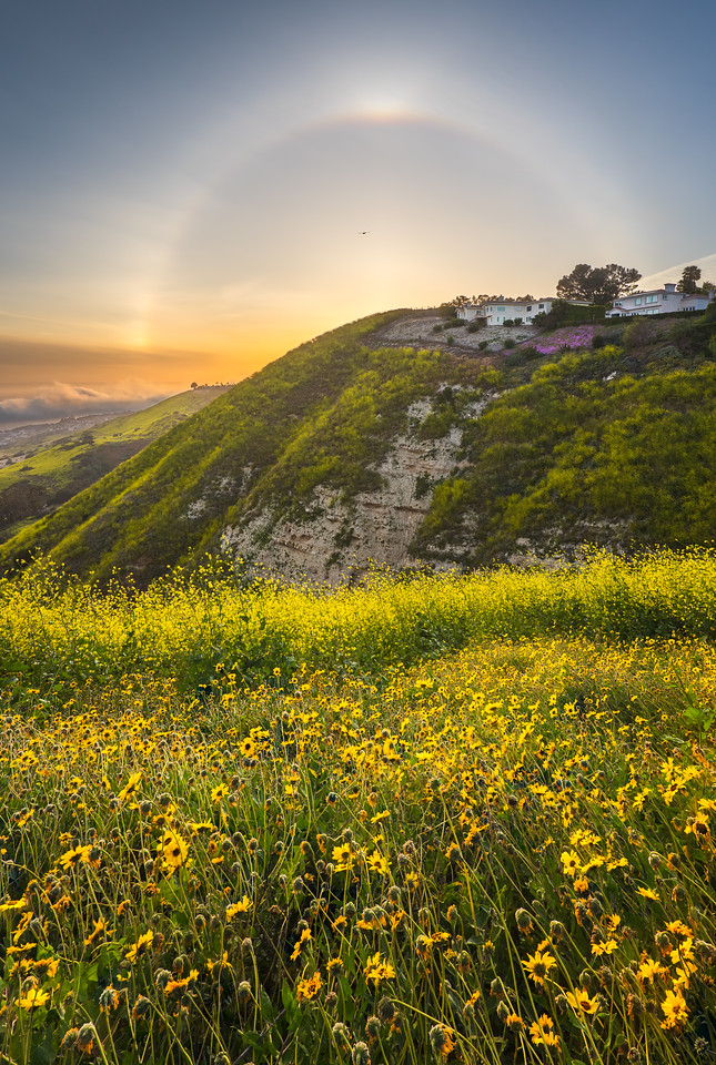 Palos Verdes sun halo and wildflowers