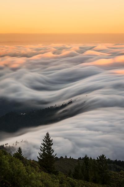Mt. Tam golden hour fog flow