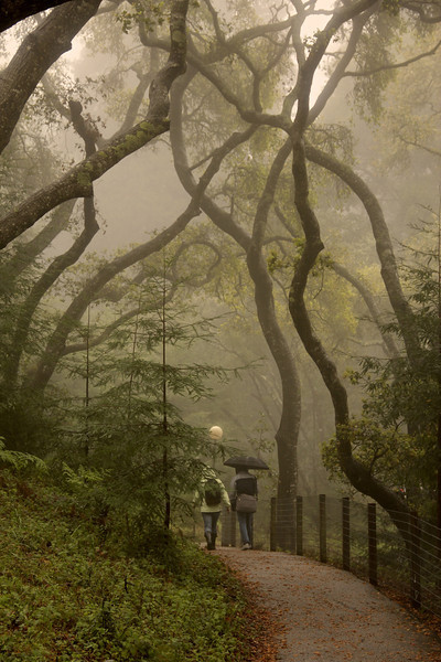 UCSC Path in the Rain