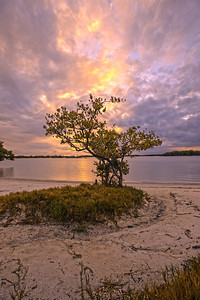 Solitude, photo taken in May 2013, Dog Beach, Bonita Springs, Florida.