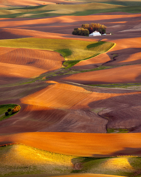 fields of gold, palouse