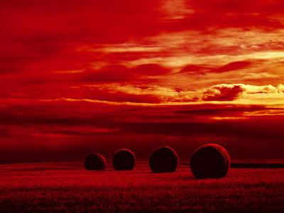 Saskatchewan Hay Roles Red