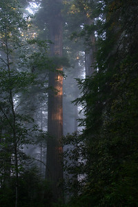 Redwoods, Redwood National Park