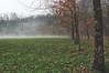 Foggy Meadow