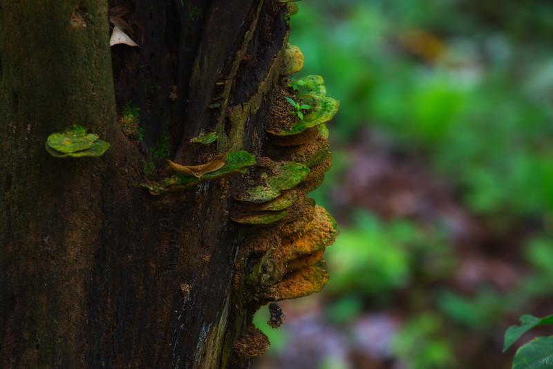 Fungus Steps