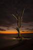 The Guardian. Photo taken October 2013, Lovers Key State park, Estero Florida