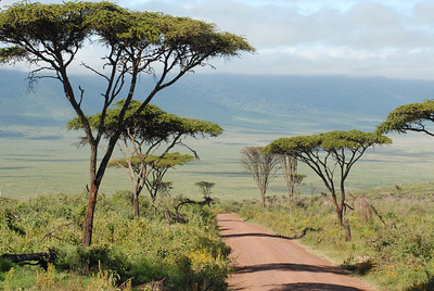 The road into Ngorongoro Crater Tanzania 2008