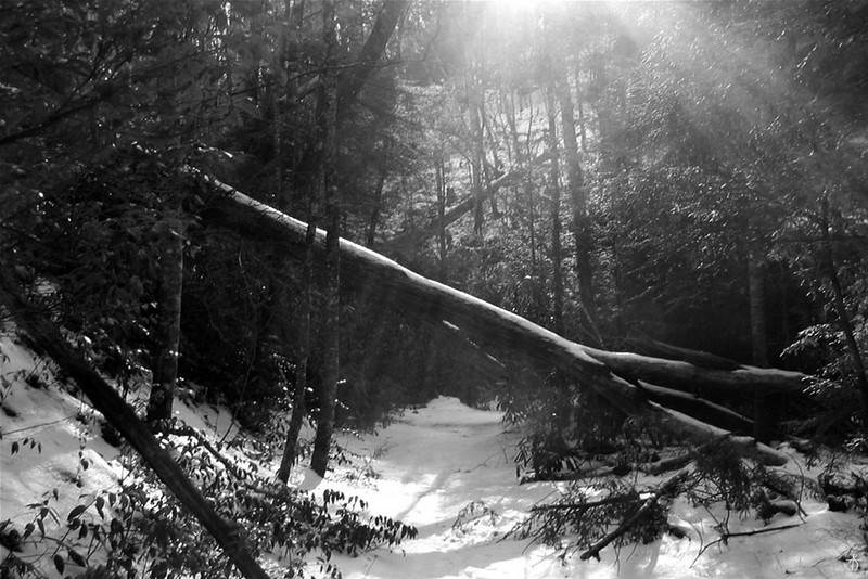 'The Obstacles of Spring's Embrace' - B+W<br /> Pisgah National Forest, NC