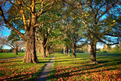 Hagley Park Autumn
