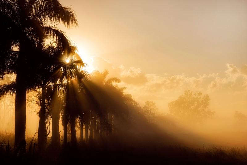 Sunrise through the fog and palm trees near Mackay, Queensland, Australia