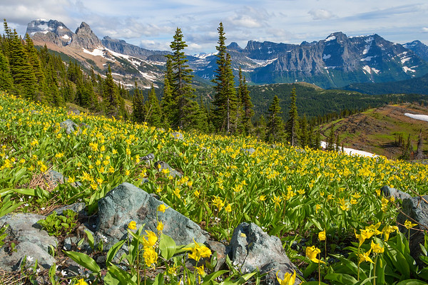 Glacier National Park Spring Bloom
