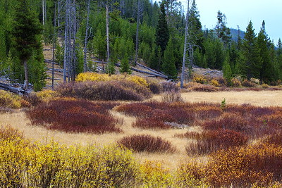 Teton Brush in Autumn