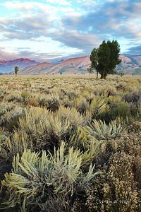Teton Landscape