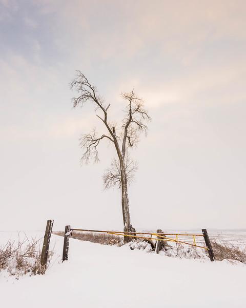 """""""Reach"""" (photography) by Jennifer Brake"""