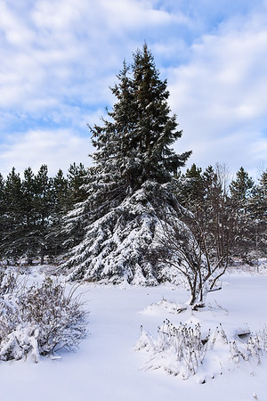 Winter  2016 2017