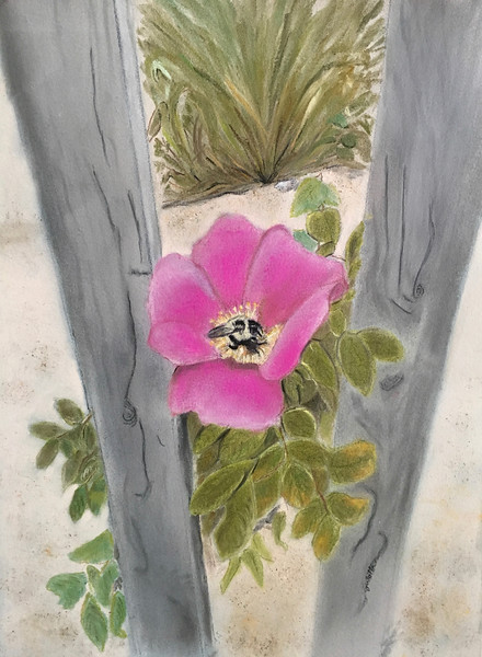 """Seaside Rose at Montauk""  (pastel) by Barbara Gulotta"