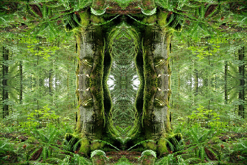 """Fractal Forest"" (photography) by Maria Coletsis"
