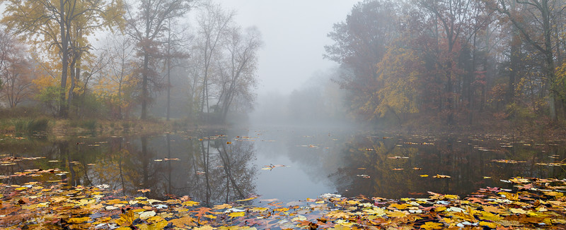 """Leaves on the Pond"" (photography) by J Michael Williams"