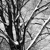 """tree on the corner"" (photography) by Robert Hopkins"