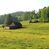 Barn in Yellow Field - Franklin, NC