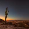 Saguaro Cactus - Phoenix Arizona