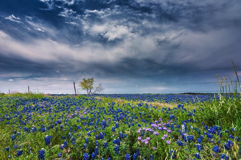 Blue Bonnet Trail - Ennis Texas 2018