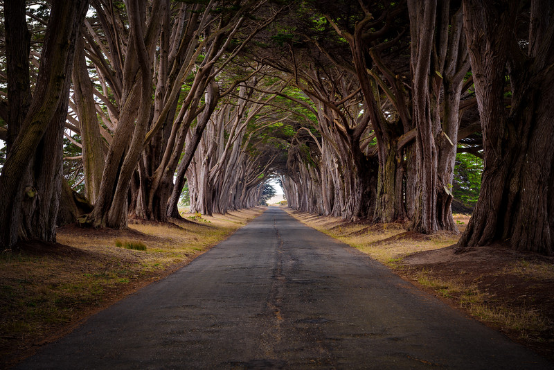Cypress Tunnel - Point Reyes California 2018