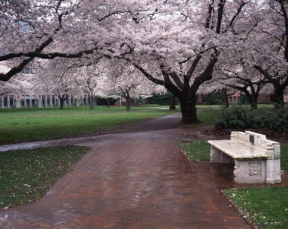 Photo taken at the University of Washington, Seattle
