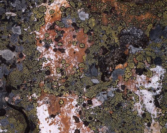 Lichen, Twin Harbor, Lake Chelan, Washington