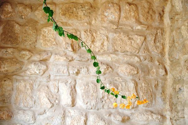 Vine, Monestary, Beit Jemal, Israel