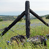 Wildflowers and Fence Post Columbia River Gorge Oregon