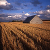 Wheatfield and barn in late light, in the Palouse area of Eastern Washington.