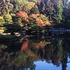 This photo was taken in the Japanese Garden, in Seattle Wasjington with a 6 x 7 Pentax