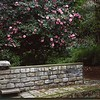 Fountain, Stone Wall and Camelias