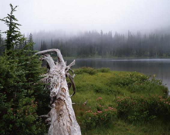 Reflection Lakes and Fog, Mt. Rainier NP, Washington