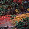 Red Leaves and Stepping Stones