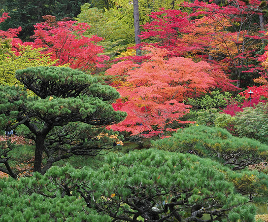 Fall Colors in the Japanese Garden